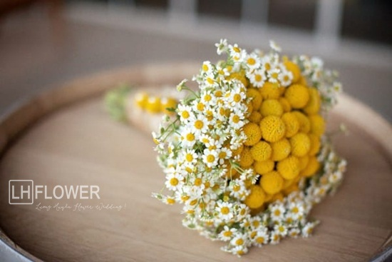 hoa cưới cúc họa mi