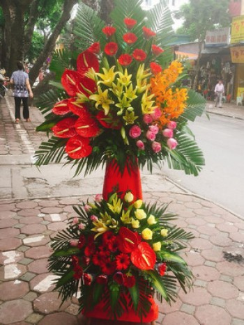 Lãng hoa có sự xuất hiện của hoa đồng tiền hn60