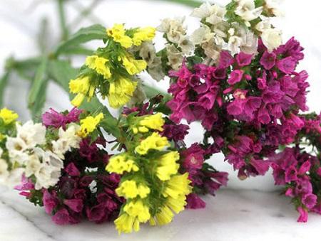 y nghia cua hoa salem