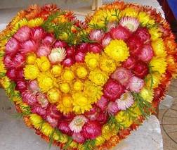 Hoa bất tử tặng sinh nhật bạn gái